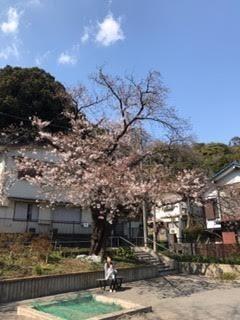201704お花見2.jpg